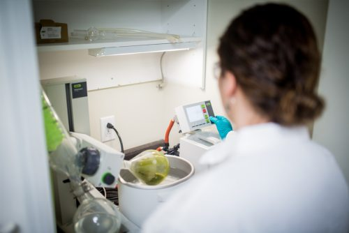 seaweed cancer research